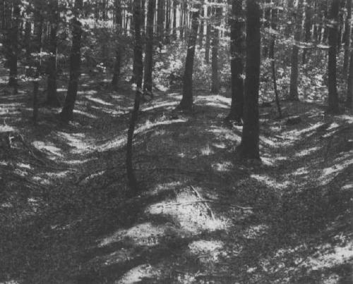 Hulveje i Geel Skov